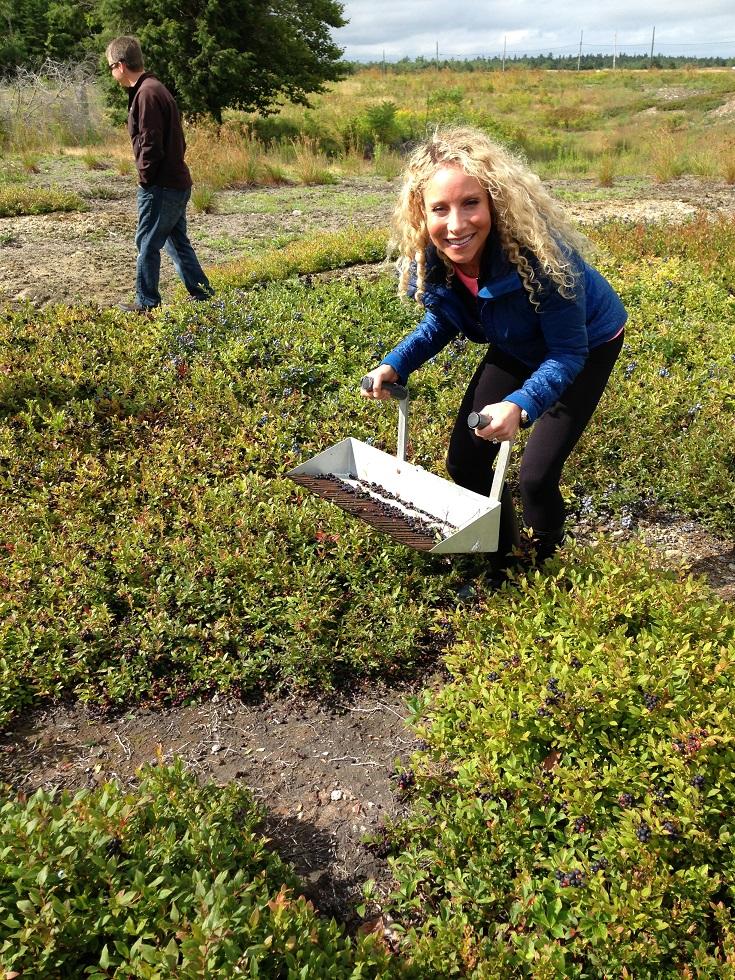 Wild_Blueberry_Tammy_raking